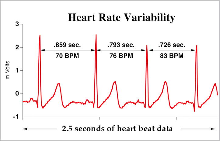 Heart Rate Variability And Sport Performance Armbeep